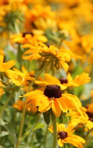 Kvetinové semená