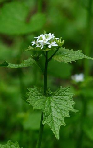 Koreninové a liečivé rastliny