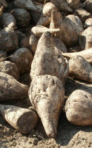 Ďatelinoviny a krmoviny